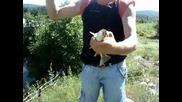 Мартин хваща риба - големец