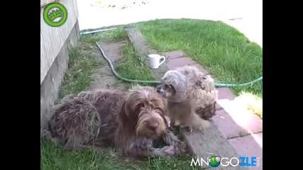 Бухал се грижи за куче