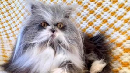 Странно домашно животно - хит в социалните мрежи