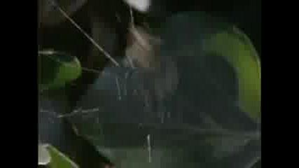 Дрогирани Паяци - Много Смях