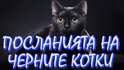 Посланията на черните котки! Какво вещае появата им!