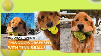Няма да повярвате колко тенис топки може да държи това куче в устата си!
