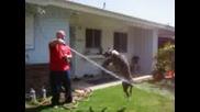 Pit Bull Тренировка С Вода