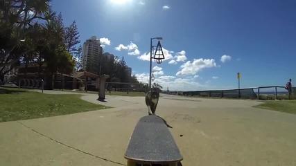 Коте на скейтборд