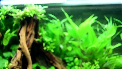 растителен аквариум