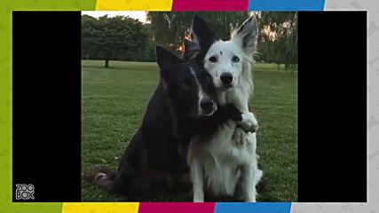 Кучето - наистина най-добрият приятел на човека!