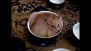 Малко котенце се събира в тенджерка с капаче