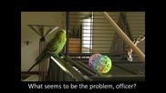 Пеещ папагал