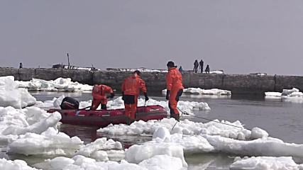 Русия: Три косатки, заклещени в леда, бяха спасени