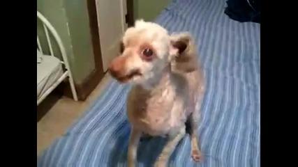 Откачено куче,такова не сте виждали никъде