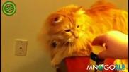 Котка пакостник