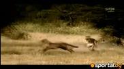Животни си разцъкват в саваната