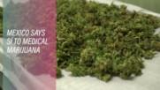 Mexico's Medical Marijuana