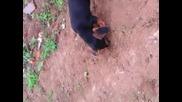 куче за трюфели