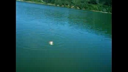 Шаран на Руенското езеро с Киро Спеца.