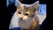 Сладко Котенце Мяука