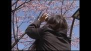 Пролетта подрани в Токио, черешите цъфнаха
