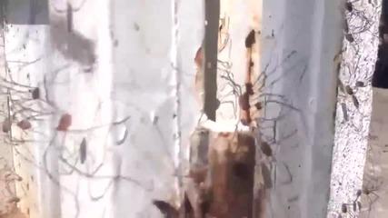 Стая пълна с паяци