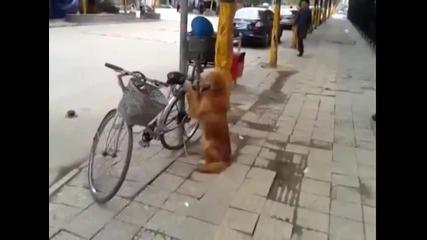Това колело и крадците го заобикалят!. Смях!