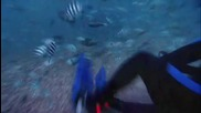 Deadly Waters - Diving with Bull Sharks#t=17