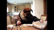 Куче закусва с нож вилица и преглежда пресата