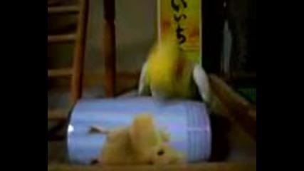 Папагала - кълвач