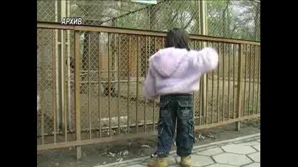 Започна ремонтът на зоологическата градина