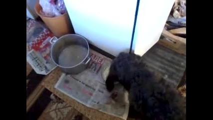 Куче не иска да яде