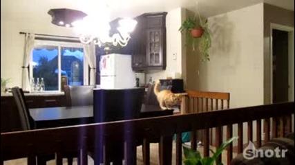 Котка паркур