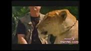 Tiger + Lion = Liger