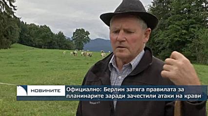 Официално: Берлин затяга правилата за планинарите, заради зачестили атаки на крави