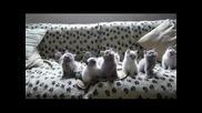 Сладки Котенца Танцуват