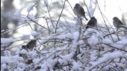 Fiona Joy Hawkins - A Winter Morning