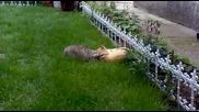 Битка между котки