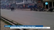 Разярен носорог уби жена и рани шестима души в Непал