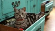 Dear Kitten_ My Friend Peanut