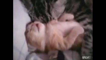 Сладко котенце сънува кошмар