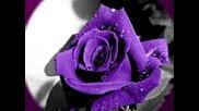 Лилавият цвят