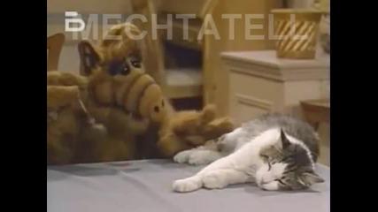 Ти не си Котка, а Геврек.. Смях