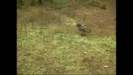 Jim Carrey - на лов за елвис