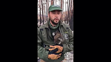 Australia: Animal rescue teams find starving koalas after bushfire devastation