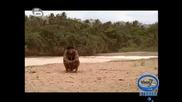 Робинзон Крузо - Островът На Робинзон - Част 7 - Бг Аудио - High Quality