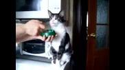 Зомби Котка
