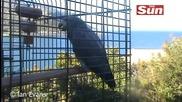 Невероятно папагал казва съставa на Манчестър Юнайтед + сър Алекс Фъргюсън