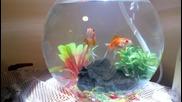 Златни рибки ( Ванката и Сашето)
