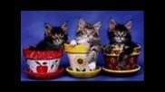 Сладки Котенца:):):)много Са Готини