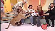 Какво се случва, когато младо лъвче и дете присъстват в предаване в ефир!