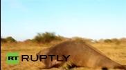 Огромен морски слон намерен да си почива в аржентинска ферма