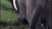 Малко Слонче И Неопитна Майка
