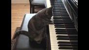 котка свири на пиано